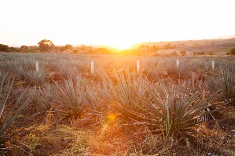 For the Love of Agave: A Discussion on Tequila & Mezcal | Bartender Atlas